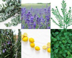 自分で治すアレルギー性鼻炎、花粉症に効くアロマオイル一覧