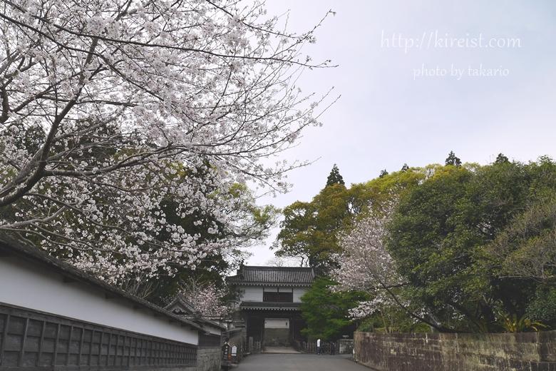 日南市飫肥城の桜